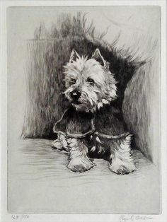 cairn terrier with a jacket on.