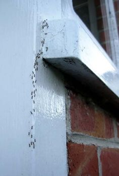 * How to - Keep Ants Out? Click for Tipsnip...