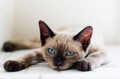 The blue eyes!