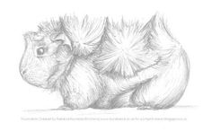 Guinea Pigs: Are there different breeds? Pencil Art Drawings, Art Drawings Sketches, Animal Drawings, Large Animals, Cute Animals, Pig Sketch, Pig Drawing, Cute Guinea Pigs, Pig Art