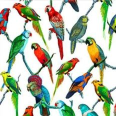Décor mural - Deyrolle - Perroquet