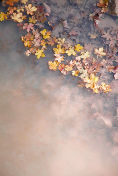 Autumn -  the last blossoms before the frost