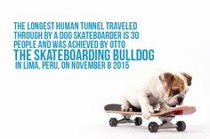 Facts  #bulldogs #pets #dogs #skateboarding #bullies #funny #fun #animals