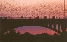 Austin, Texas, is known as Bat City for the almost two million bats that reside under the Congress Avenue Bridge. Austin Texas, Visit Austin, Loving Texas, Texas History, Colorado River, Texas Travel, Free Things To Do, Wanderlust Travel, 6 Years