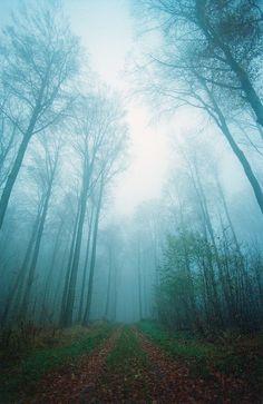 atmospheric woods