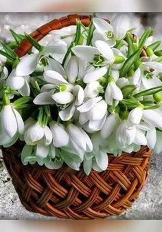 Ideas Flowers Photography Bouquet Beautiful For 2019 Exotic Flowers, Pretty Flowers, Fresh Flowers, Spring Flowers, White Flowers, Beautiful Flower Arrangements, Floral Arrangements, Arte Floral, Flower Wallpaper