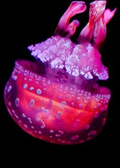The different kinds of jellies are just never ending