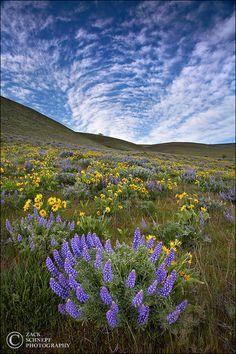 Wildflower Vortex Columbia River Gorge, Oregon by Zack Schnepf Photography Beautiful World, Beautiful Places, Beautiful Pictures, Amazing Places, Wonderful Places, Columbia River Gorge, All Nature, Amazing Nature, Htc Wallpaper