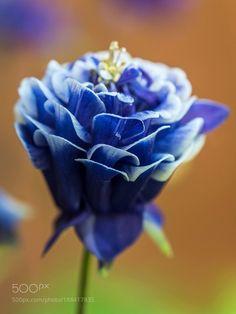 A little blue ... by bjcowles