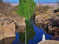 Onde a água passa no meio do deserto a vida brota em cores exuberantes. Caminho para as Lagunas Altiplanicas. San Pedro de Atacama Chile. Viagens para recordar. Um lugar pra voltar. #sanpedrodeatacama #atacama #desert #nature #chile #mercosul #americadosul #sudamerica #viagem #férias #trip #travel #ootd #photooftheday #memories