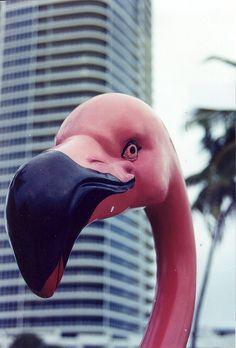 Miami South Beach: South Beach, Miami FL#makeityourown #stellaandjamie#giveaway