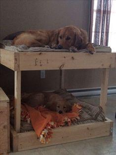 Easy DIY pet bunk beds @KaufmannsPuppy