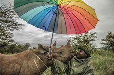 ami_vitale_kenyas-last-rhinos