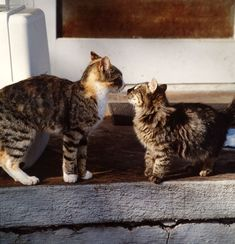 Cat to Cat Introductions: Introducing Cats