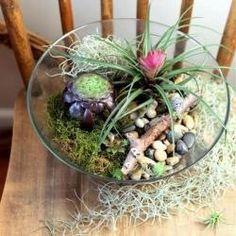 Salad Bowl Terrarium Project