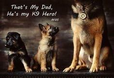 K9 hero! #german #shepherd #dog #k9 …