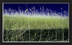 Wiese, Schilf und Himmel... mehr brauchts nicht  :-) Mit Fazit zur Cam -  Pixelfaxe/Flickr Herbs, Photo And Video, World, Heaven, Nice Asses, The World, Herb, Peace, Earth