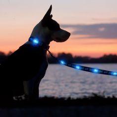 LED dog collar & lead