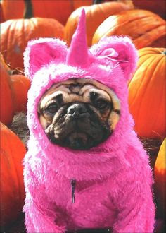 Pug in Pink Unicorn Costume Dog Halloween Card Greeting Card by Avanti Press | eBay