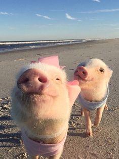 Take me to the beach !!!