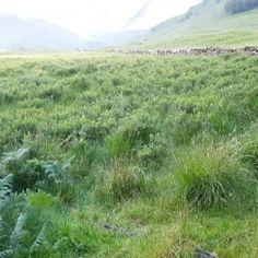Glencoe in Scotland | #glencoe #Scotland #ecosse #paysage #landscape #mountains #montagne
