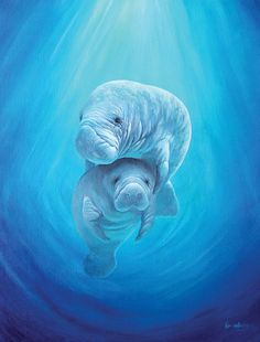 Original 24 x 30 Manatee painting by KimWestberryArt on Etsy, $350.00