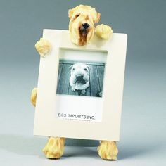 Soft coated Wheaten Terrier Picture Frame makes a by Petasauraus