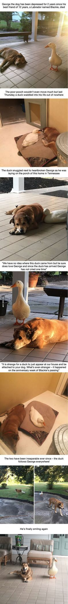 This dog was depressed for 2 years after his best friend died, but then this duck showed up