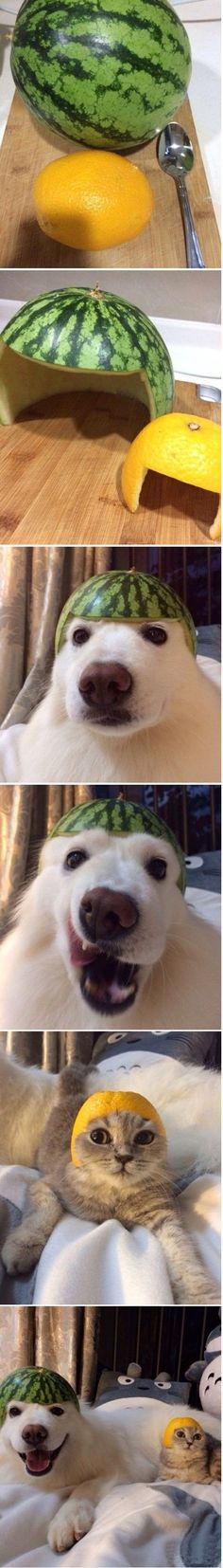 Watermelon Dog And Orange Cat