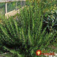 Handmade Cosmetics, Health Advice, Natural Medicine, Korn, Pergola, Herbs, Gardening, Nature, Plants
