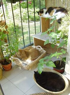 cat house The effect of catnip only lasts about five to 15 minutes, so it might be good to have some other plants in your arsenal of cat toys. Outdoor Cat Enclosure, Reptile Enclosure, Cat Run, Cat Playground, Cat Garden, Balcony Garden, Cat Condo, Outdoor Cats, Pet Furniture