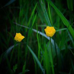 Ved Haarby Vådområde #visitfyn #fyn #nature #nature_perfection #naturelovers #mothernature #natur #denmark #danmark #dänemark #landscape #assensnatur #assens #mitassens #vildmedfyn #fynerfin #vielskernaturen #visitassens #instapic #picoftheday #spring #forår