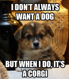 True-well partly--I always want a dog even though we already have two corgis!