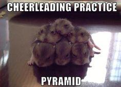 cheerleading                                                                                                                                                      More