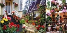 Idei fascinante de aranjare a florilor pentru a crea un mic paradis in fata casei tale Paradis, Plants, Plant, Planets