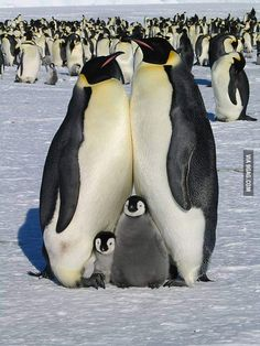 A perfect family picture.