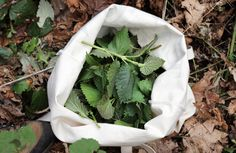 How To Harvest Nettle Without Getting Stung