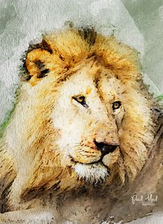 Watercolor Lion Watercolor Lion, Watercolor Animals, Watercolor Paintings, Lion Painting, Painting & Drawing, Judah And The Lion, Exotic Cats, Lion Pictures, Cow Art