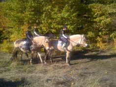 O modalitate inedita de relaxare alaturi de cei mici, in compania unor cai foarte simpatici. www.horseland.ro