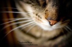 A sweet little kitty nose (photo by Stephanie Moon)