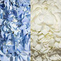 Hydrangeas - Blue & White - 26 Stems - Sam's Club