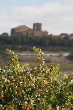 Vine view in La Rioja, #Spain
