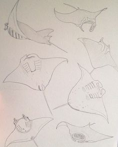 Animal Sketches, Animal Drawings, Manta Ray Tattoos, Shark Drawing, Creature Drawings, Ocean Art, Wire Art, Animation, Bunt