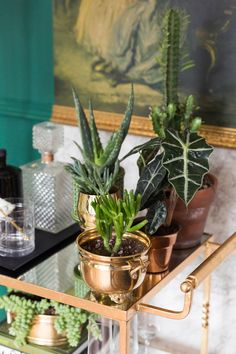 Bar cart with the cutest plants, cactus, cacti and succulents Succulent Pots, Planting Succulents, Garden Plants, Succulent Containers, Plant Pots, Indoor Planters, Diy Planters, Copper Planters, Plants Indoor
