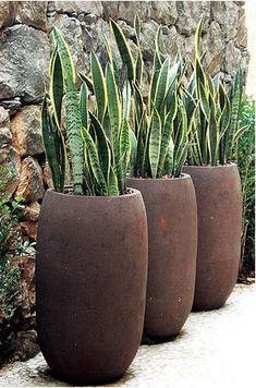 Neste ambiente, a planta foi eleita para contrastar com a parede de pedra cacão, que é um tipo de basalto. Projeto do paisagista Marcelo Belloto Garden Troughs, Garden Planters, Outdoor Planters, Outdoor Gardens, Bamboo Planter, Tall Planters, Modern Gardens, Small Gardens, Container Plants