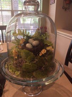 Natural bird nest under glass dome