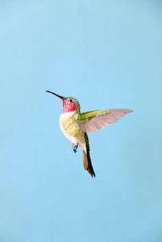 BirdWoman DIANA BELTRAN HERRERA