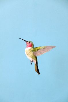 Ruby-Throated Hummingbird paper sculpture by Diana Beltran Herrera Art And Illustration, Graphic Design Illustration, Hummingbird Pictures, Hummingbird Tattoo, Origami, Bird Sculpture, Sculptures, Red Throated Hummingbird, Arte Peculiar