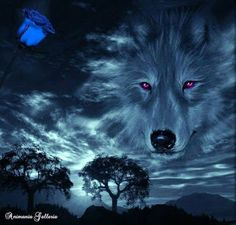 in the heavens Wolf Images, Wolf Pictures, Beautiful Wolves, Animals Beautiful, Native Art, Native American Art, Wolf And Moon Tattoo, Wolf Poster, Wolf Artwork