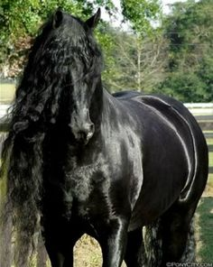 images of beautiful horses | think a black horse is almost a fantasy the